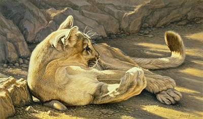 Cougar Painting - Caught Napping by Paul Krapf