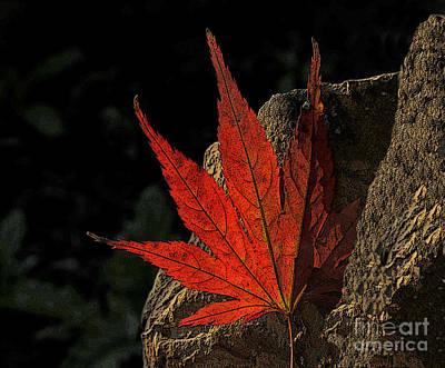 Addie Hocynec Art Photograph - Caught On A Rock by Addie Hocynec