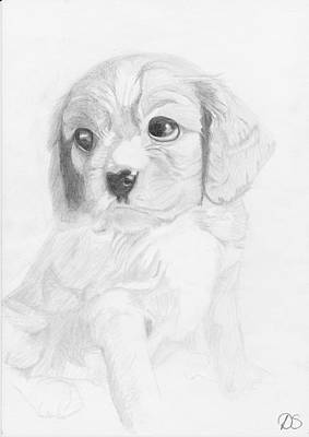 Cavalier King Charles Spaniel Puppy Print by David Smith