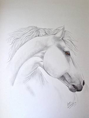 Wild Horse Drawing - Cavallo by Joette Snyder