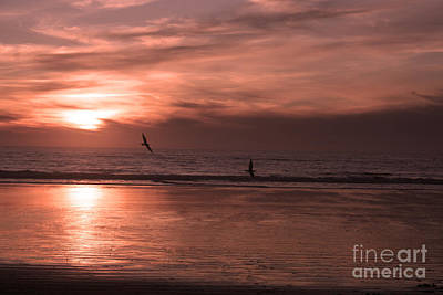 Cayucos Beach With Seagulls Print by Ian Donley