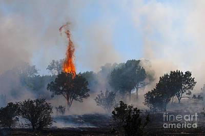 Cedar Fire Print by Richard Mason