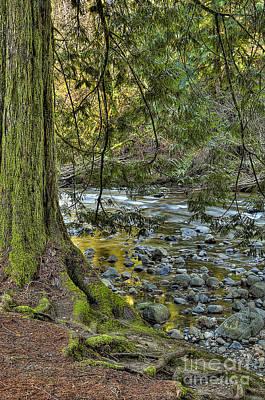 Tree Roots Digital Art - Cedar Tree By Kanaka Creek by Sharon Talson