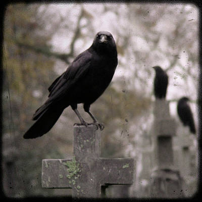 Cemetery Crows Print by Gothicolors Donna Snyder