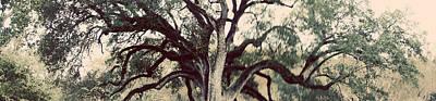 Victorian Death Digital Art - Cemetery Tree Vintage by Max Mullins