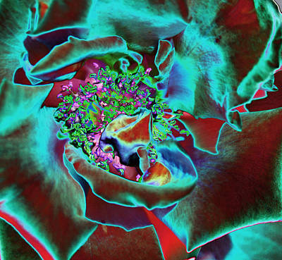 Rose Photograph - Center Of The Universe by Sylvia Thornton