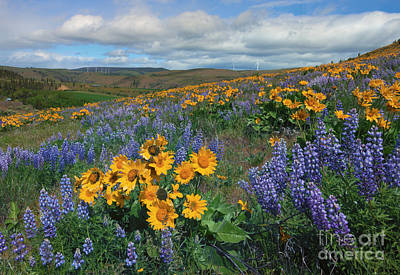 Central Washington Spring Print by Mike  Dawson