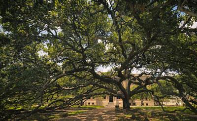 Landscape Photograph - Century Tree by Joan Carroll