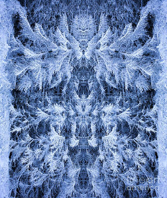 Symmetry Photograph - Cernunnos by Tim Gainey