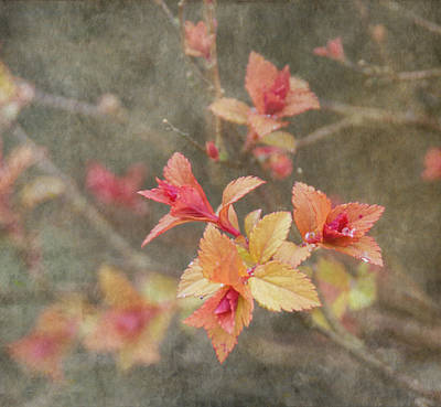 Change Of Seasons Print by Angie Vogel