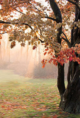 Woods Photograph - Change Of Seasons by Brooke Ryan