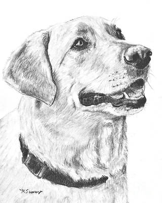 Purebred Drawing - Charcoal Drawing Yellow Lab In Profile by Kate Sumners
