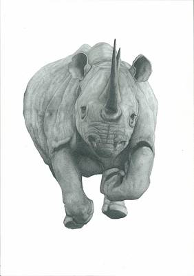 Rhinocerus Drawing - Charging Rhino by Rich Colvin