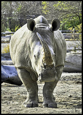 Rhino Photograph - Charging Rhinoceros by LeeAnn McLaneGoetz McLaneGoetzStudioLLCcom