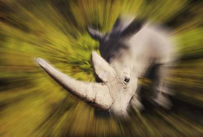 Charging Rhinocerosafrica Print by Thomas Kitchin & Victoria Hurst