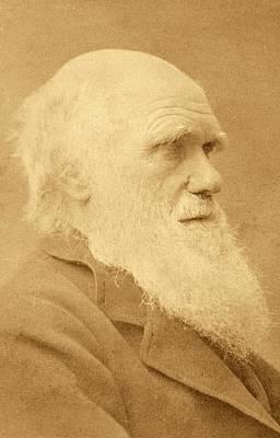 Charles Darwin Print by American Philosophical Society