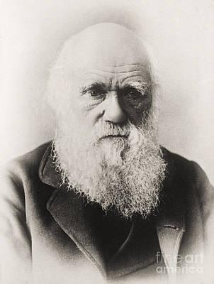 Elderly Photograph - Charles Darwin by English School