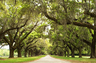 Charleston Avenue Of Oaks Print by Stephanie McDowell