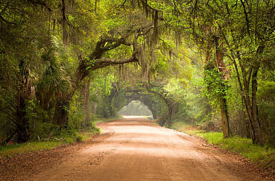Fog Photograph - Charleston Sc Edisto Island Dirt Road - The Deep South by Dave Allen