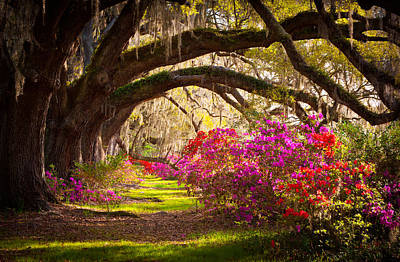 Sunlight Photograph - Charleston Sc Magnolia Plantation Gardens - Memory Lane by Dave Allen