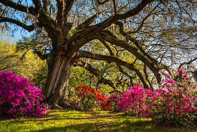 Charleston Sc Magnolia Plantation - Southern Hospitality Print by Dave Allen