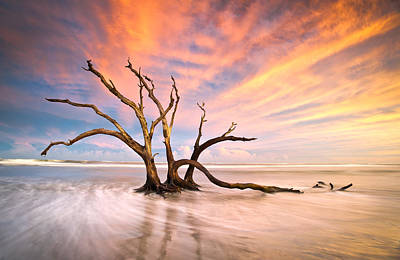 Flowing Photograph - Charleston Sc Sunset Folly Beach Trees - The Calm by Dave Allen