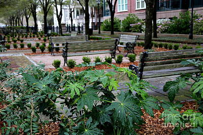 Rainy Day Photograph - Charleston Waterfront Park Benches by Carol Groenen