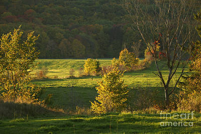 Arbres Verts Photograph - Charming Nature Scene by Aimelle