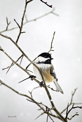 Cute Bird Photograph - Charming Winter Chickadee by Christina Rollo
