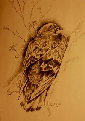 Ledge Drawing - Checker Pigeon by Derrick Higgins
