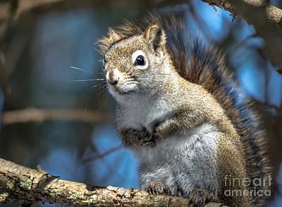 Squirrel Photograph - Cheeky Squirrel by Cheryl Baxter