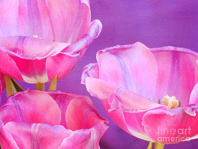 Pinks And Purple Petals Photograph - Cheers by Irina Wardas