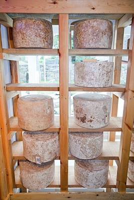 Cheese In A Specialist Cheese Shop Print by Ashley Cooper