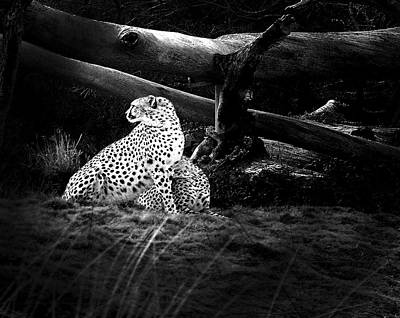 Cheetah Digital Art - Cheetah by Camille Lopez