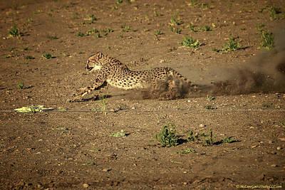 Cat Photograph - Cheetah Chase by LeeAnn McLaneGoetz McLaneGoetzStudioLLCcom