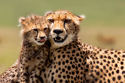 Cheetah Mother And Cub In Masai Mara Print by Maggy Meyer