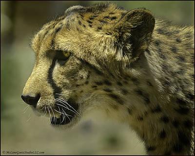 Cat Photograph - Cheetah On The Prowl by LeeAnn McLaneGoetz McLaneGoetzStudioLLCcom