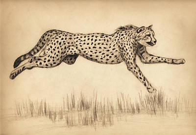 Cheetah Drawing - Cheetah by Sesh Artwork