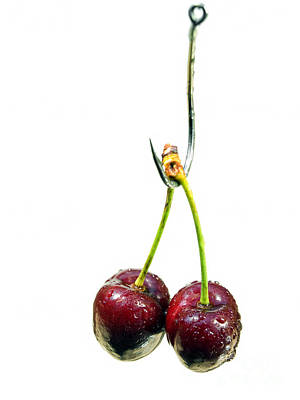 Cherry Bait Print by Sinisa Botas