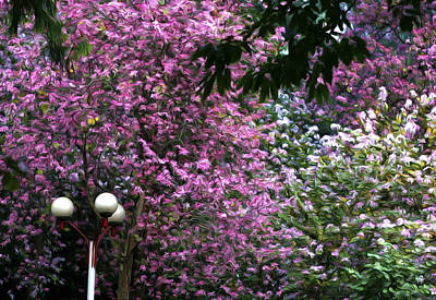 Sakura Painting - Cherry Blossom 3 by Lanjee Chee