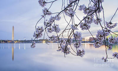 Cherry Blossom Dawning Print by Terry Rowe