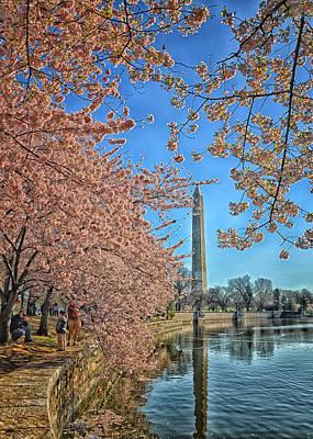 Cherry Blossom Fun Original by Boyd Alexander