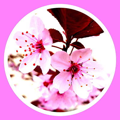 Cherry Blossom Print by The Creative Minds Art and Photography