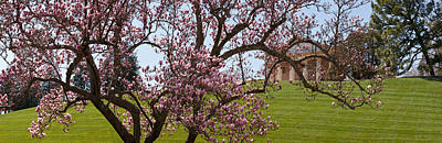 Cherry Blossoms Photograph - Cherry Blossom Trees At The Gravesite by Panoramic Images