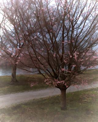 Cherry Blossom Trees Print by Flo Karp