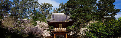 Golden Gate Park Photograph - Cherry Blossom Trees In A Garden by Panoramic Images