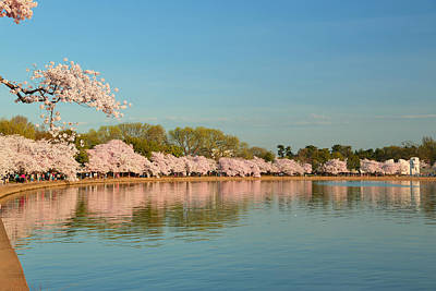 Tidal Photograph - Cherry Blossoms 2013 - 018 by Metro DC Photography