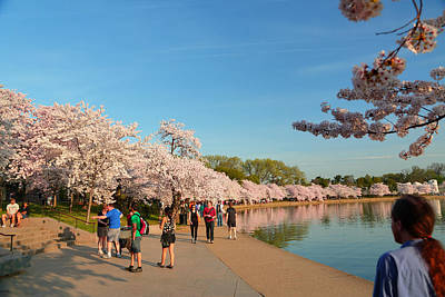 Tree Photograph - Cherry Blossoms 2013 - 020 by Metro DC Photography