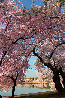 Dc Photograph - Cherry Blossoms 2013 - 024 by Metro DC Photography