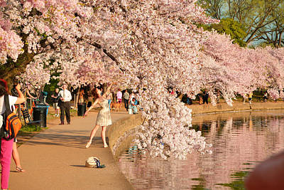Tidal Photograph - Cherry Blossoms 2013 - 076 by Metro DC Photography